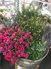 Blooms & Botanicals