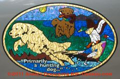 "Golden Retriever ""Primarily A Hunting Dog"" XL Oval Magnet"