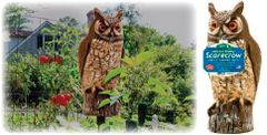 Great Horned Owl by Dalen Products