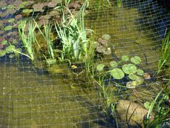 Heron/Critter Protection Netting with 2 inch Mesh