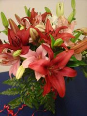 Colourful liliums