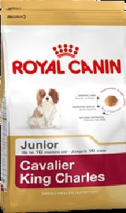 CAVALIER KING CHARLES JUNIOR 1.5KG