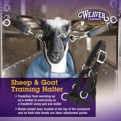 Sheep & Goat Training Halter