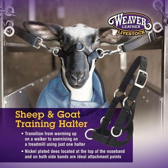 Sheep & Goat Training Halter