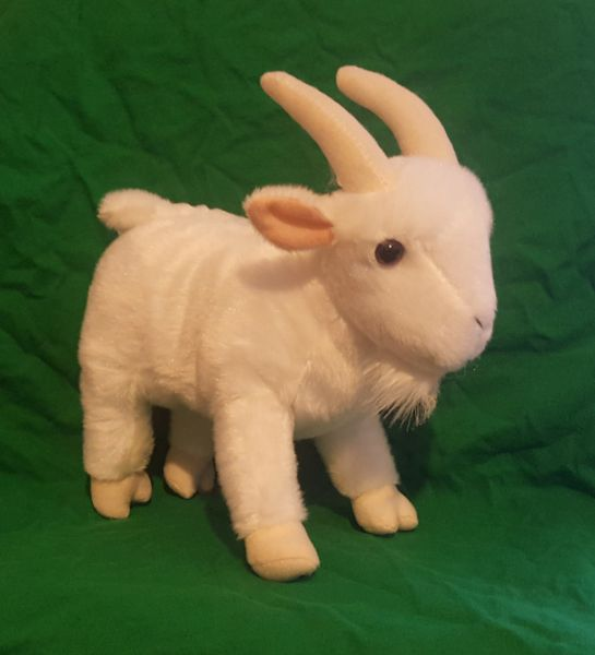 White Toy Goat