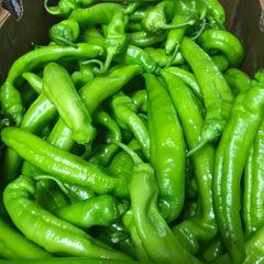 Local long green peppers 1 lb本地金穗农场长辣椒(微辣)一磅