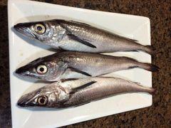 Local wild Cod 野生新鲜小鳕鱼