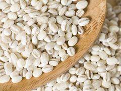 GRAIN_Organic Pear Barley 2lb / bag 有机洋薏仁 2磅袋