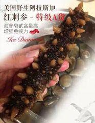Alaska wild Red sea cucumber 2 lbs 美国阿拉斯加野生红刺参 2磅袋(大约6-8根)