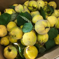 Fresh Local Quince