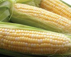 Fresh P&C Diamond Corn 5 pcs 钻石牌双色甜玉米5根