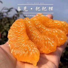 Fresh Oranges 空运新鲜果粒橙(春见耙耙柑)