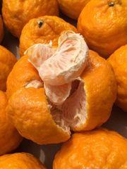 Golden Nugget Mandarin 3lbs bag 加州无籽有叶新鲜多汁金椪柑橘3磅袋
