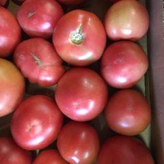Okanagan Field Tomatoes 本地沙瓤番茄