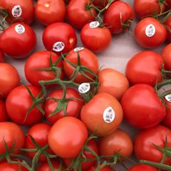 Veg_Local Red Vine Tomatoes 2 lbs/bag 本地温室有枝西红柿2磅