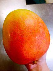 Pro_Jumbo Australian Mangoes 空运特大西澳芒3颗(约5磅)