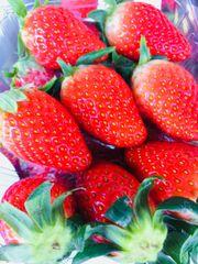 Fresh Sweet Strawberry 新鲜甜草莓1磅盒