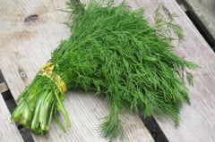 Veg_USA Baby Dill 2 bunches 德州茴香2扎