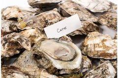 Seafood_Local Live Jumbo/Large Oyster 1 DOZEN 温岛鲜活珍珠蚝/大生蚝一打