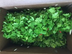 Veg.o_Two EE's Farm Organic Cilantro 1 bunch 本地Two EE农场有机香菜1扎