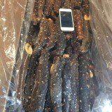 Canadian Sea Cucumbers 【本周大特价/中小号】加拿大哥伦比亚帝王参