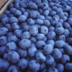 Pro_Local unsprayed blueberry 10 lbs box