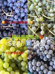 Local Organic 8 lb Grapes 【本地有机葡萄礼品箱组合】2磅小珍珠+2磅玫瑰香+2磅牛奶柠檬+2磅小巨峰