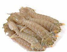 Mantis shrimp 500g 冰鲜皮皮虾 500克盒