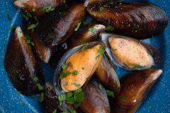 Local Honey mussel live 本地鲜活甜心青口
