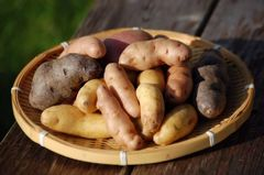 Local Organic Fingering Potatoes 本地有机大拇指土豆