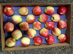 Pro.o_Local Organic Ambrosia Apples 【刚刚丰收】本地有机甜脆安培士苹果