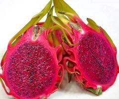 Australian Red Dragon Fruits 【空运新到、养颜美容】澳洲精品红肉火龙果