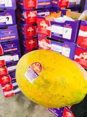 Australian Tree-ripe Red Papaya 空运澳洲红肉木瓜2颗(约6.5磅)
