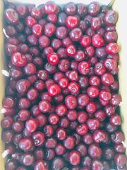 Fresh sour cherry 7 lbs Box