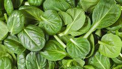 Organic Baby spinach Leaf 有机小菠菜叶2磅袋