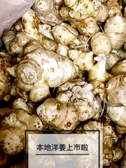 Local Fresh Ginger Young 5 lbs bag 【脆嫩无丝】本地新鲜洋姜2磅