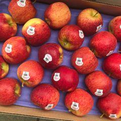 Pro.New Zealand Jumbo size Envy apple 8pcs 【最新到店/特大号】新西兰特大号爱妃苹果8颗袋