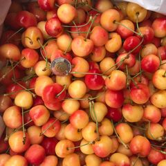 Pro_BC Local Large Rainier Cherries 10.5lb box