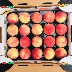 Australian Peaches 【包甜!包脆】澳洲白玉脆桃