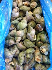 Seafood_Canadian Whelk Cooked 4.4lbs 【国宴食材】即食加拿大野生翡翠螺4.4磅
