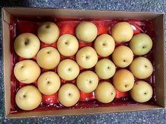 Pro_Organic Koushui Pear 本地新鲜采摘香甜有机丰水梨