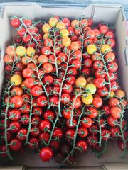 Local cherry tomatoes 11lbs Box
