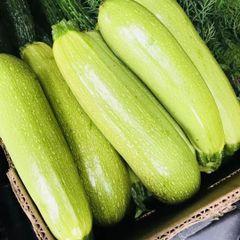 Veg.o_Local Farm Organic grey squash 2 lbs 本地慈心农场有机西葫芦2磅