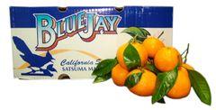 Blue Jay Satsuma mandarin oranges 蓝鸟牌有叶新鲜多汁无籽甜柑橘