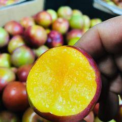 Air Fresh Pluot Golden treat 10 pcs澳洲迷你钻石李