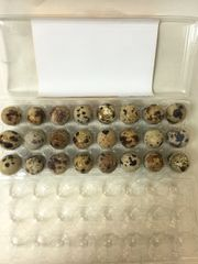 Quail Eggs 24 Counts box 鹌鹑蛋24个盒