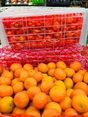 Sugar Madarins 【薄皮/甜】砂糖橘3磅