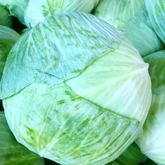Veg_Local Taiwan cabbage 1 count 本地台湾高丽菜1颗