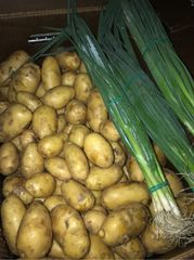 Veg.o_Organic Yukon gold potatoes 5 lbs bag 有机金黄土豆5磅