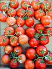Local Red vine Tomatoes 2 lbs 本地连枝西红柿2磅